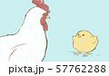 ニワトリとヒヨコ 57762288