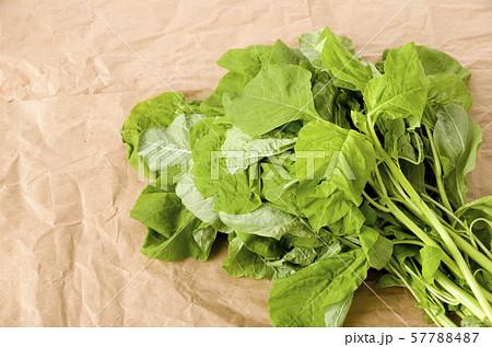 アマランサスの葉(葉野菜) 57788487