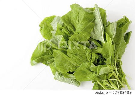 アマランサスの葉(葉野菜) 57788488