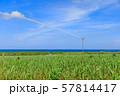 サトウキビ畑の灌漑用水 57814417