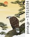 松と鷲 57816384