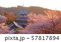 夕暮れの吉野山の吉野朝皇居跡の桜 57817894