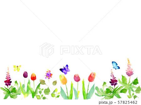 春 草花 背景 チューリップ 57825462