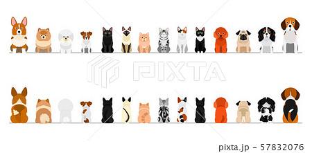 犬と猫のボーダー 小型犬と猫 全身 前後セット 57832076