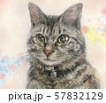 猫イラスト 57832129