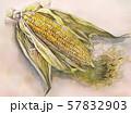 トウモロコシ・リアル・水彩画 57832903