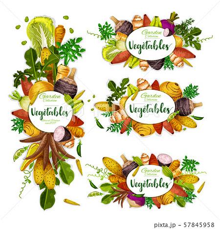 Exotic veggies frame, organic vegetables 57845958