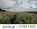 北海道 富良野の花畑 57927402