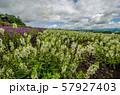 北海道 富良野の花畑 57927403