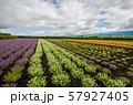 北海道 富良野の花畑 57927405