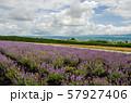 北海道 富良野の花畑 57927406