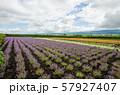 北海道 富良野の花畑 57927407