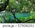 鳥海山から湧き出る湧水で満たされた丸池 57936201