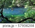 鳥海山から湧き出る湧水で満たされた丸池 57936208