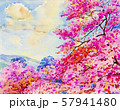 Painting pink color of  Wild  Himalayan  cherry 57941480