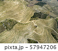 Top view on terraced vineyards Douro 57947206