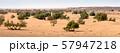 Sand dunes and trees in Sahara desert 57947218