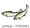 鮎 あゆ アユ 筆 イラスト 57953451