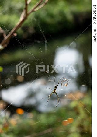 蜘蛛 巣と脱皮の抜け殻 小川の背景 b 57965961