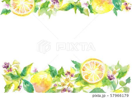 レモン イラスト 柑橘 背景素材  57966179