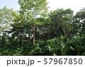 ジャングル 57967850
