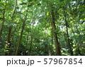ジャングル 57967854