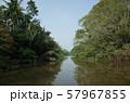 ジャングル 57967855