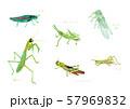夏の虫 水彩 57969832
