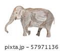 アジアゾウ 水彩 57971136