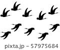 シルエット 飛ぶ鳥 57975684