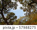 Background of autumn tree branches. 57988275