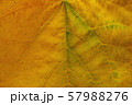 Background of yellow leaf texture. 57988276
