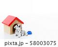ペット 犬 58003075