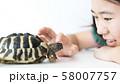 女の子とペットのヘルマンリクガメ 58007757