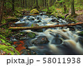 fast forest river 58011938