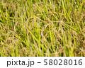 稲 58028016