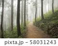 森 木 並木道 58031243