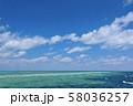 オーストラリア・ハミルトン島 58036257