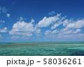 オーストラリア・ハミルトン島 58036261
