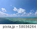 オーストラリア・ハミルトン島 58036264