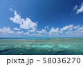 オーストラリア・ハミルトン島 58036270