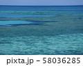 オーストラリア・ハミルトン島 58036285