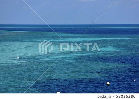 オーストラリア・ハミルトン島 58036286