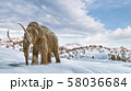 Woolly mammoth scene in environment with snow. 58036684