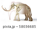 Woolly mammoth with skeleton, viewed from a side. 58036685