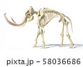 Woolly mammoth skeleton, realistic 3d 58036686
