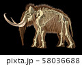 Woolly mammoth with skeleton superimposed, viewed 58036688
