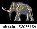 Woolly mammoth skeleton, realistic 3d 58036689