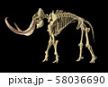 Woolly mammoth skeleton, realistic 3d 58036690