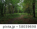 Autumn forest scenery with path 58039698